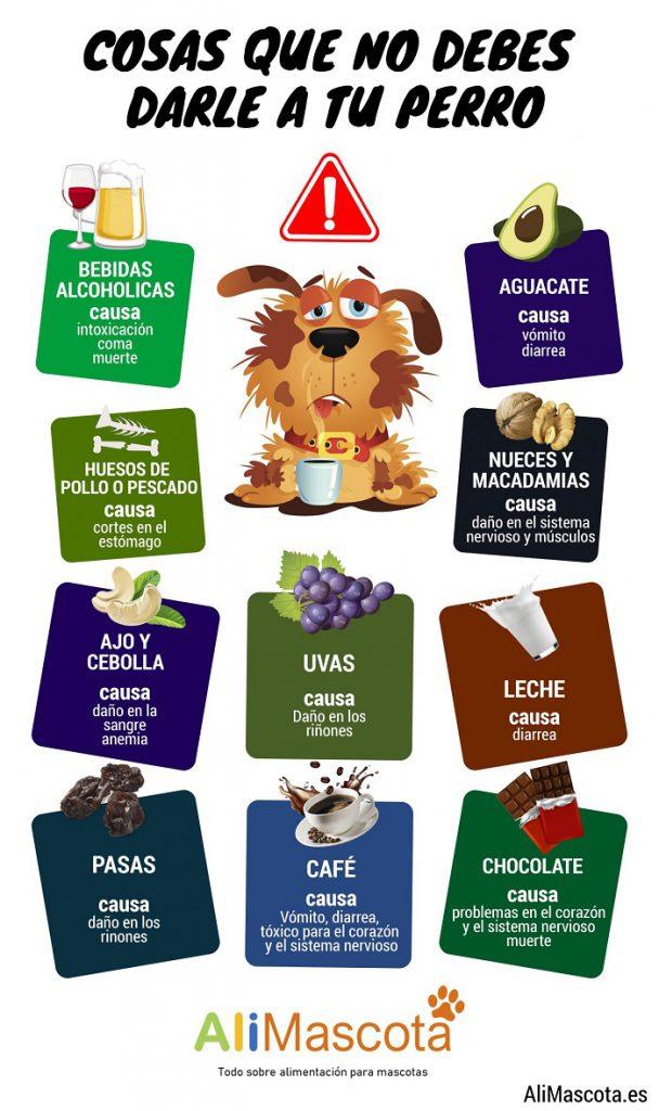 Qué no pueden comer los perros