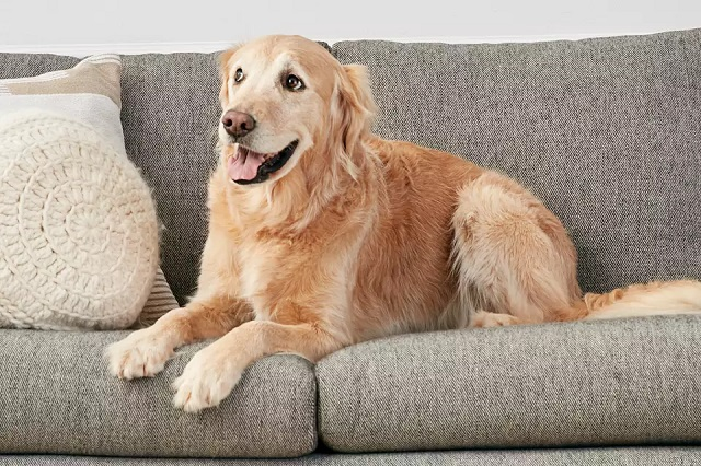 Perro en un sofá antimanchas