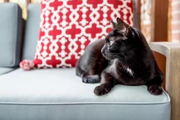 Gato en un sofá antiarañazos